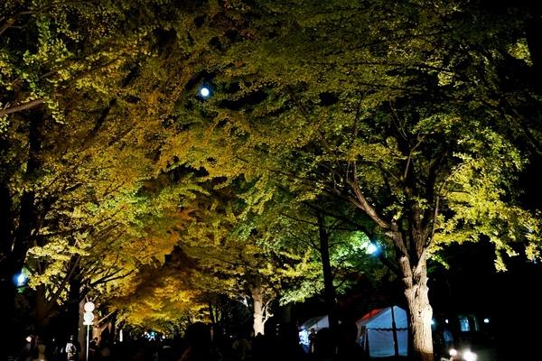金葉祭5.JPG